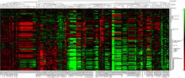 Long non-coding RNAs in myelodysplastic syndromes: clinical relevance and implication in the pathogenesis